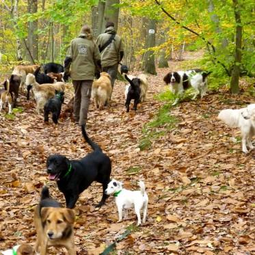promenade-groupe-chien