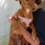 Photo de MAMI, lévrier qui à été adopté