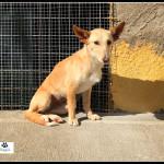 Photo de FLORA, un lévrier à adopté