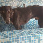 Photo de VINO, un lévrier à adopté