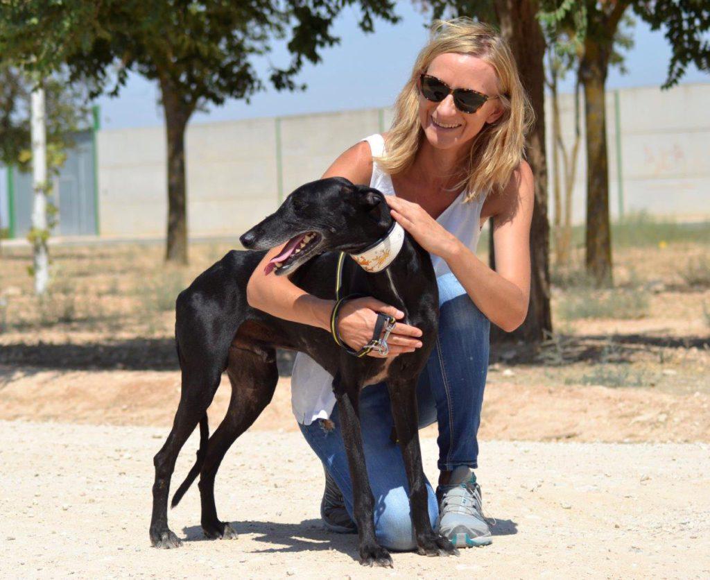 Photo de WAGNER, un lévrier en attente d adoption