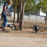 Photo de ARI et ARIA, un lévrier à adopté