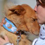 Photo de LIMBO, lévrier qui à été adopté