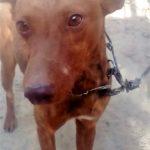 Photo de TOMILLO, un lévrier à adopté
