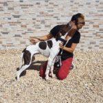 Photo de RUFO, un lévrier à adopté
