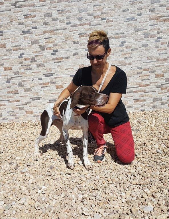 Photo de RUFO, un lévrier en attente d adoption