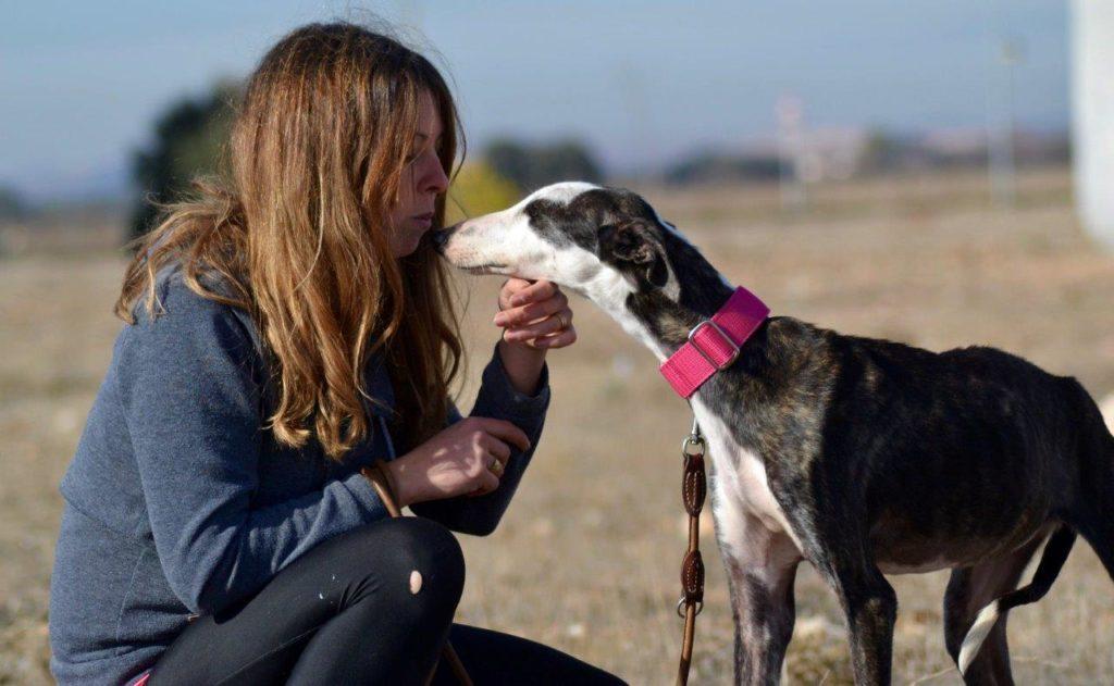 Photo de HERA, un lévrier en attente d adoption