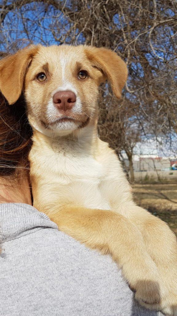 Photo de RAFE, un lévrier en attente d adoption