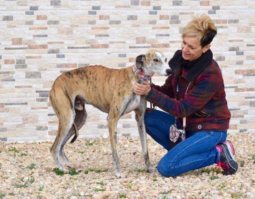 Photo de INDURAIN, un lévrier en attente d adoption