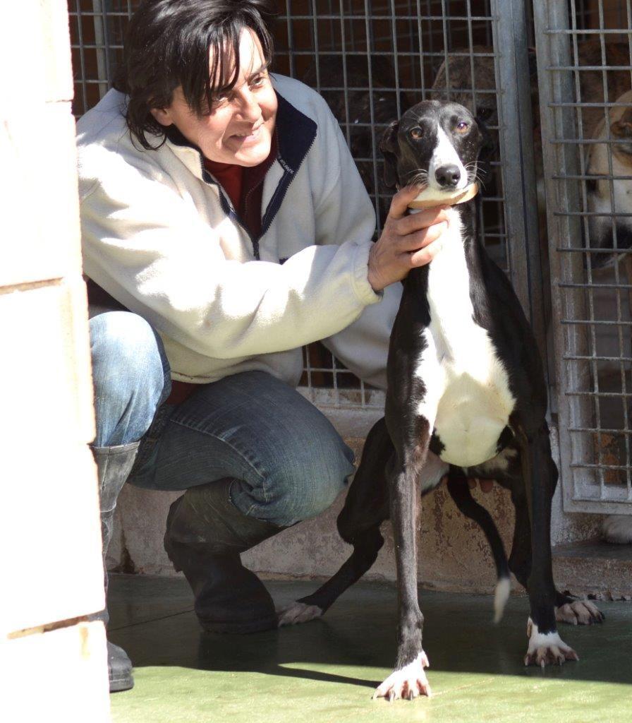 Photo de IRENE, un lévrier en attente d adoption