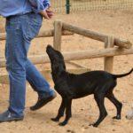 Photo de ELO, un lévrier à adopté