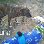 Photo de LUNA, un lévrier à adopté