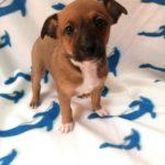 Photo de TAMI, lévrier qui à été adopté